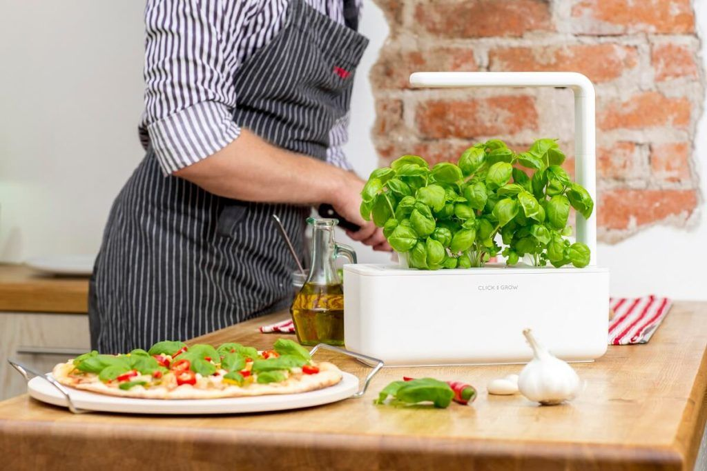 click and grow basil on pizza