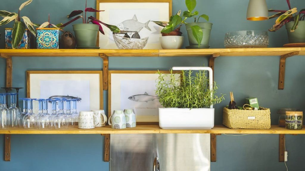click and grow rosemary kitchen counter